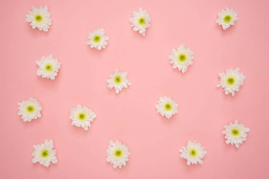 Weiss - Gelb - Pink