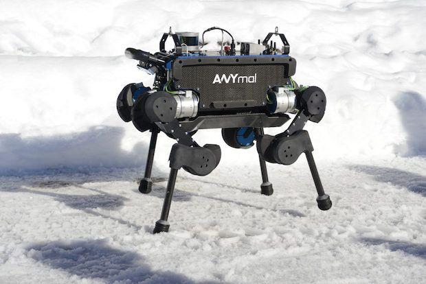 ANYmal Roboter auf Schnee
